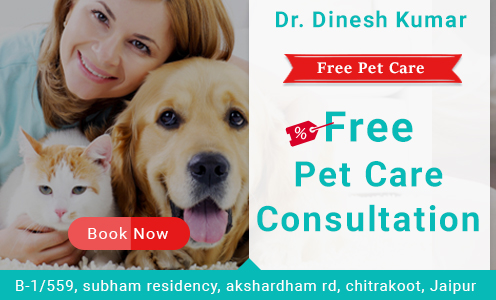 Pet Care Clinic Free Consultation