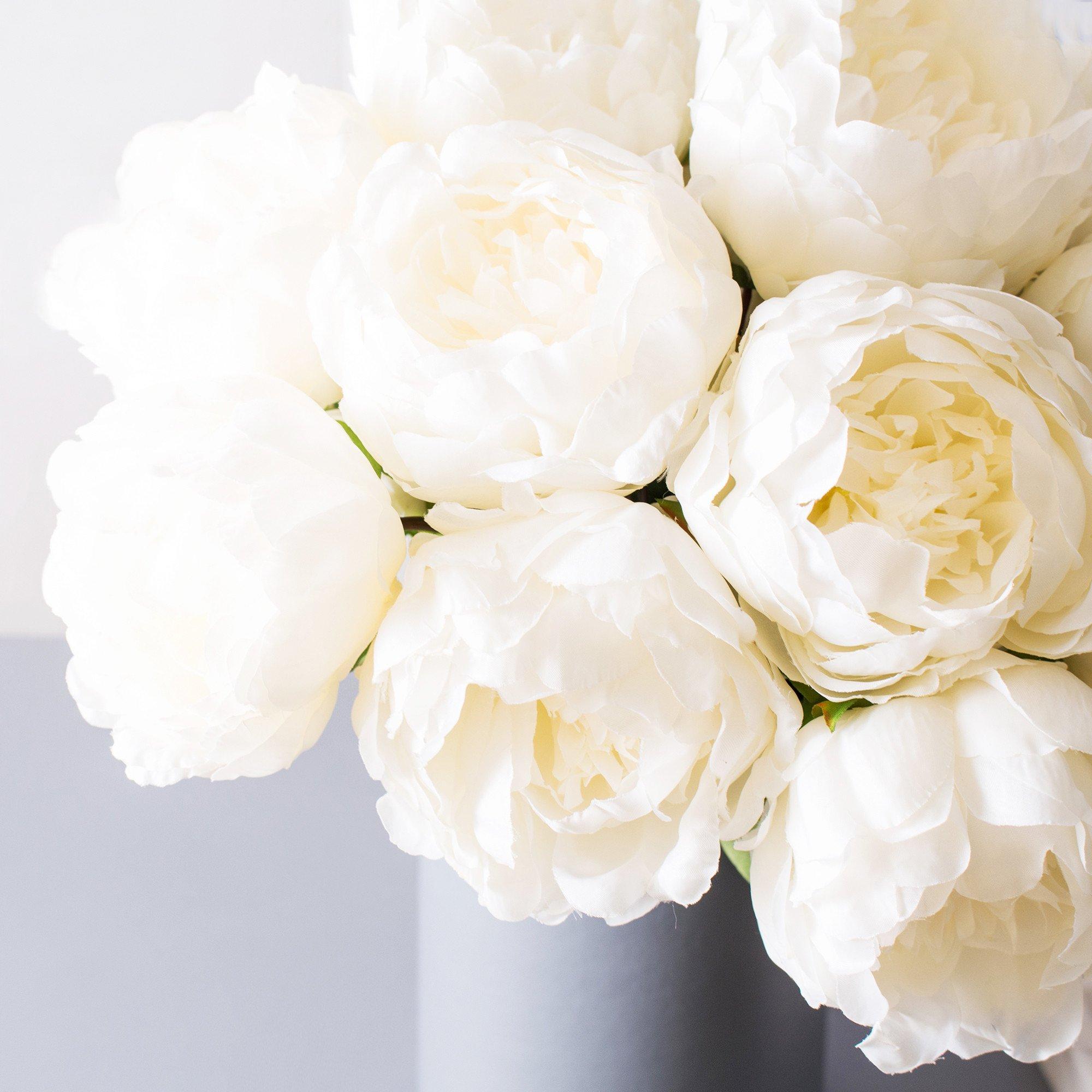 The gentle world of white peony 7 remarkable uses mightylinksfo