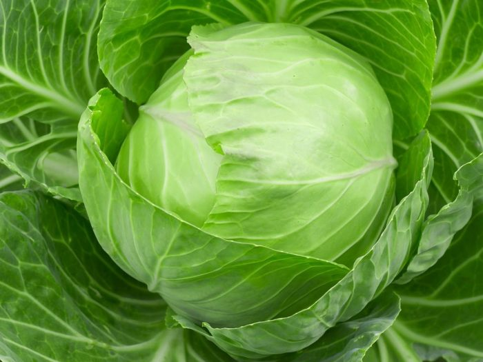 Amazing Health Benefits Of Cabbage   Nutrition Facts
