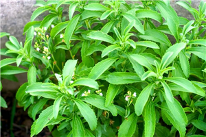 8 Impressive Benefits Of Stevia